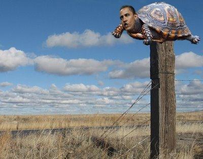 Obama post_turtle