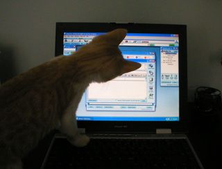 Cat watching computer