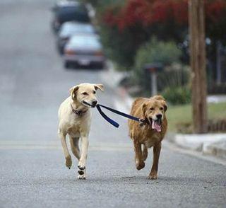 Dog_walker